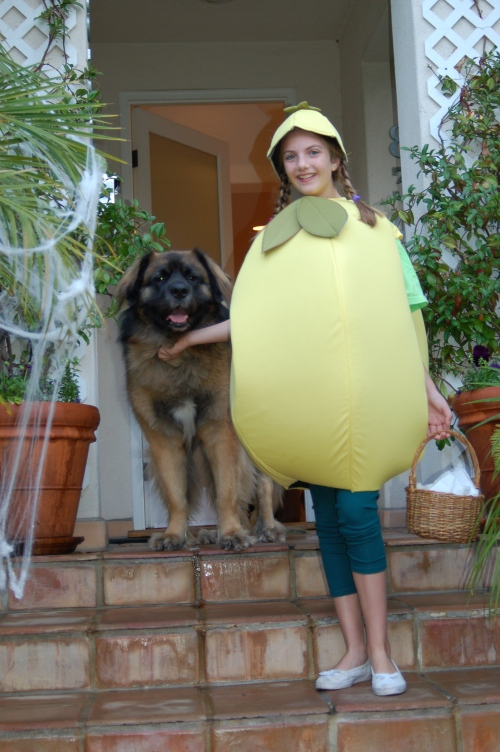 Emma was a lemon this past halloween....