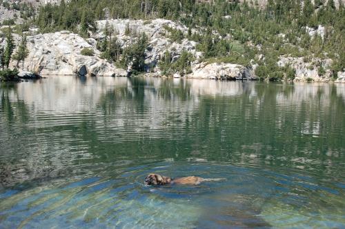 guthrieswimming